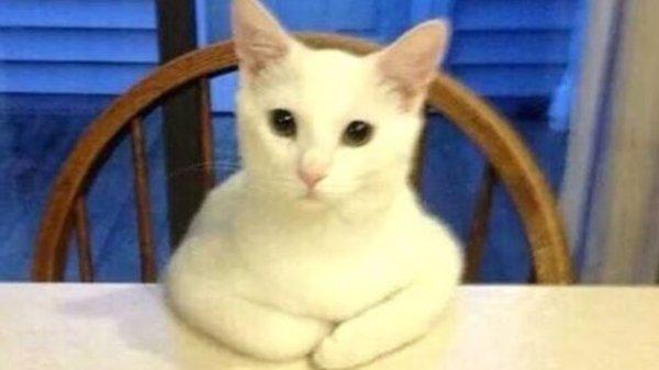 As M3rdas Que A Minha Mulher Diz Ao Gato (9)